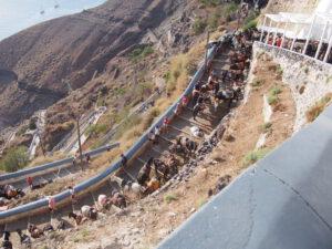 De ezels in Fira